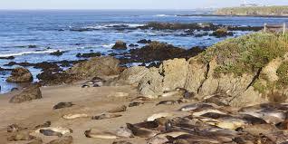 Piedras Blancas Light Station Piedras Blancas Light Station Visit California
