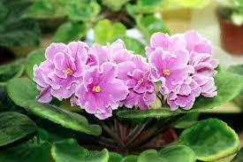 beautiful indoor plants 5 indoor plants that need the least maintenance comfort works