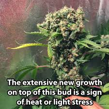 5 secrets to controlling heat when growing cannabis indoors grow