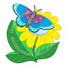 cartoon butterfly on yellow flower by clairev toon vectors eps