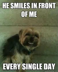 Annoyed Dog Meme - annoying dog memes quickmeme