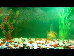 wallpaper ikan bergerak untuk pc youtube animated wallpaper and desktop backgrounds aquarium mpg