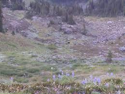 big quilcene trail 833 to marmot pass joe bales