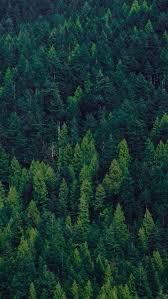 Raz 2013 Forest Friends Decora - 21 best home screen lock screen backgrounds images on pinterest