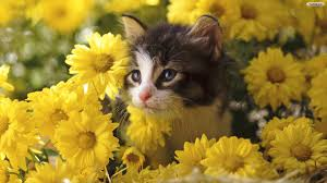 cute halloween kitten wallpaper cats in flowers cats wallpapers cats flowers wallpapers
