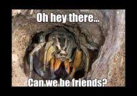Cute Spider Memes - beautiful memes about spiders 23 funny spider memes weneedfun