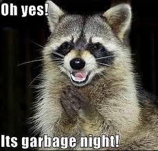 Funny Raccoon Meme - racoon humor animal humor raccoon funny ideas for the house