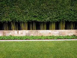 backyard beautiful bamboo fence screens for japanese zen garden