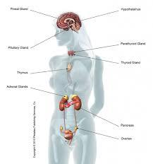Endocrine System Concept Map Human Hormones Choice Image Human Anatomy Image