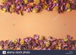 Dry Flowers Dry Flowers Composition On Colorful Background Border Frame Made