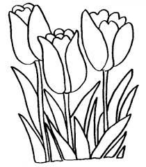 tulip flower coloring pages free printable flowers new