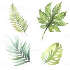 set of leaves of tropical plants watercolor illustration stock