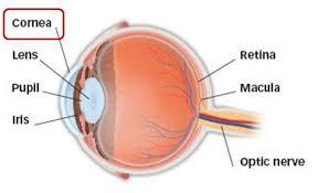 Surface Anatomy Eye Refractive Surgery Eye Physicians Of Washington