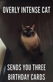 Birthday Meme Cat - overly intense cat sends you three birthday cards overly intense cat