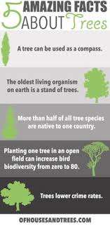 amazing facts and figures about trees infographic amazing facts