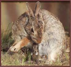 How Do I Get Rid Of Rabbits In My Backyard Wild Bunnies