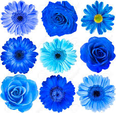 blue flowers various blue flowers top view up selection isolated