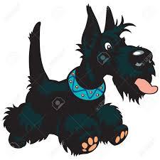scottish terrier stock photos u0026 pictures royalty free scottish