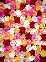colorful roses colorful roses flower wall printed backdrop 107