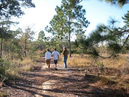 longleaf pine trail walking u0026 hiking bok tower gardens