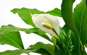 low maintenance houseplants easy care house plants