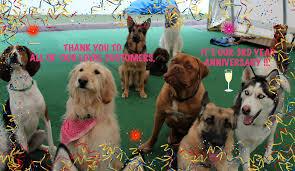 rosie u0027s doggie day care u0026 more saint louis mo 63129 yp com