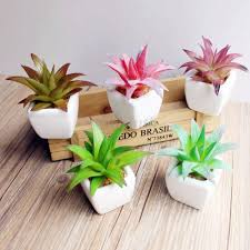 splendid small office desk plants artificial small mouth aloe cool