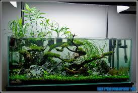 Aquascape Designs Inc 127 Best Aquascape Images On Pinterest Aquascaping Aquarium