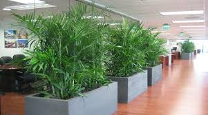 Easy To Care For Indoor Plants Indoor Plants That Clean Air And Liven Up Your Home Indoindians