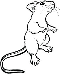 coloring page of a rat rat coloring page rat coloring pages rat coloring page mouse and rat
