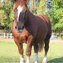 Kentucky travel alerts images Horseback riding vacations in kentucky usa today jpg
