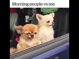 Morning People Meme - morning people vs me youtube