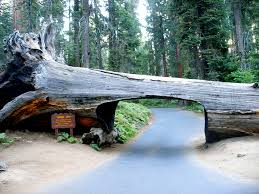 California National Parks images Tunnel log crescent meadow trail sequoia national park california jpg