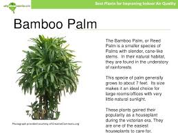 best plants for air quality best plants for improving indoor air quality 4 728 jpg cb 1278698667