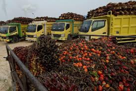 Minyak Cpo globals harga cpo terseret pelemahan minyak kedelai
