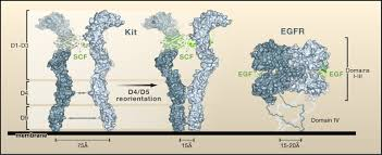 a new twist in the transmembrane signaling tool kit cell
