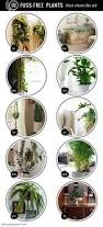 best house plants best 25 best plants for home ideas on pinterest best indoor