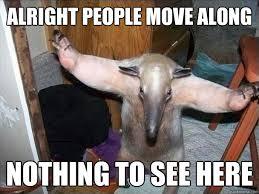 Anteater Meme - ego veroanteater move along ego vero