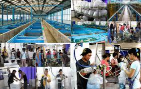 ornamental fish exporter aquarium fish exporter tropical fish