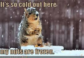So Cold Meme - it s so cold out here my nuts are frozen i can has cheezburger