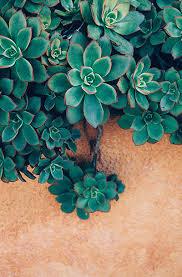photography download succulent photography bohemian decor