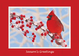 discount christmas cards winter cardinal greeting card discount greeting cards