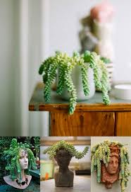 decorations refreshing indoor house plants that are also easy to