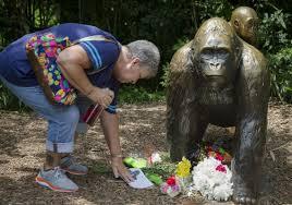 zoos stress safety measures after cincinnati gorilla shooting