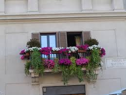 balcony flowers inspiring ideas 6 balcony plants capitangeneral