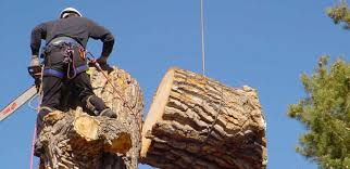 get the best tree removal services within your area pink the play