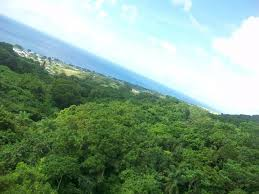 Above The Canopy by Got Any Ziplining Tips Cruise Critic Message Board Forums