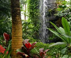 Erie Botanical Gardens Indoor Waterfall At Buffalo And Erie County Botanical Gardens