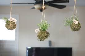 hanging from ceiling diy hanging indoor garden planter with rope ideas