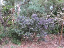 sydney native plants five shire parks and gardens sydney